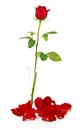 Red Rose In Vase With Petals And Beads Stock Photography - 35378912