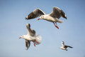 Flying Seagull Stock Photography - 35383392