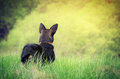 Dog Standing In Grass Royalty Free Stock Images - 35399379