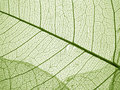 Green Leaf Texture Royalty Free Stock Photos - 35414098