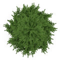 Tree Isolated. Pinus Fir-tree Top Royalty Free Stock Image - 35416586