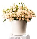Bunch Of Creamy Roses In A Bucket Over White Stock Images - 35418544
