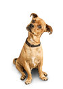 Dog With Head Tilted Stock Photography - 35439332