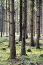 Autumn Forest Stock Photography - 35440922