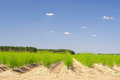 Asparagus Field Royalty Free Stock Images - 35444829