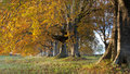 Autumn Colours Royalty Free Stock Photography - 35459997