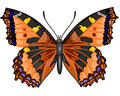 Butterfly Vanessa Cardui Royalty Free Stock Photo - 35476595