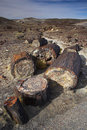Petrified Forest Stock Photography - 3559382