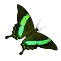 Tropical Butterfly Royalty Free Stock Photography - 35538457