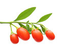 Goji Berry Isolated Royalty Free Stock Photos - 35587578