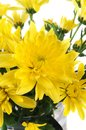 Yellow Flowers Royalty Free Stock Photography - 35590487
