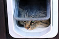 The Cat Flap Stock Image - 35598831