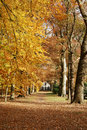 House In The Woods With Autumn Royalty Free Stock Images - 3560939