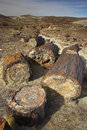 Petrified Forest Royalty Free Stock Image - 3568696