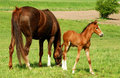 Horse With A Baby Foal Stock Photography - 35641762