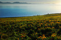 Misty Lake With Meadow Stock Images - 35646264