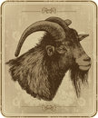 Vintage Menu With Horny Goat, Hand-drawing. Vector Stock Photography - 35646382