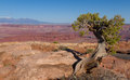 Dead Horse Point Stock Image - 35656781