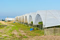 Greenhouse Stock Photography - 35668412