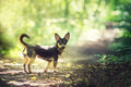 Small Dog In Woods Stock Photo - 35678780