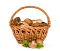 Royal Mushrooms In A Basket Royalty Free Stock Photography - 35690187