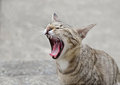 The Cat Life Stock Photography - 35691992