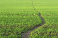 Line Of Path. Green Grass Background. Stock Photography - 35697992