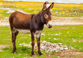 Donkey Farm Animal Brown Color Standing On Field Grass Stock Images - 35701804