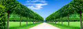 Panorama Alley In The Park Royalty Free Stock Photo - 35779585