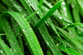 Raindrops On Grass Stock Images - 3581154