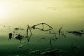 Lake That Is Poisoned And Polluted Royalty Free Stock Photos - 35805908