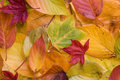 Colourful Autumn Leaves Stock Photo - 3599040