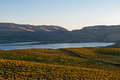 A View Of Lake Chelan From The Benson Vineyard At Sunset Royalty Free Stock Photo - 35907945