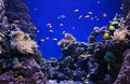 Corals And Clown Fishes Royalty Free Stock Images - 35914949