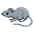 House Mouse Stock Photo - 35943090