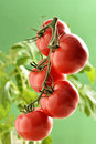 Tomatoes Stock Photography - 35965392