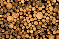 Pile Of Logs Royalty Free Stock Photo - 360645
