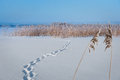 Frozen Lake With Reeds Royalty Free Stock Images - 36004829