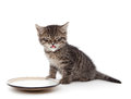 Kitten With Sour Cream On His Lips Stock Photos - 36005313