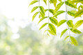 Leaves As Frame Against Nature Background Stock Images - 36032774