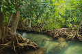 Mangrove Forest Stock Photo - 36042000