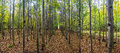 Trees Alley In  Autumn Forest Stock Images - 36051094