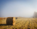 Foggy Morning At An Autumn Mowed Field Stock Images - 36058774