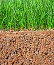 Newly Sown Grass Seed Showing Roots In The Soil Royalty Free Stock Image - 36065196