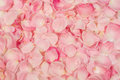 Background Of  Rose Petals Stock Image - 36073021
