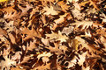 Dry Leaves Background Stock Photography - 36074462