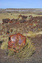 Petrified Forest Royalty Free Stock Images - 3611369