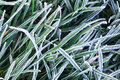Frosty Grass Stock Images - 3612174