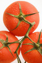 Red Tomatoes. Stock Images - 3613644