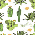 Cactus Pattern Royalty Free Stock Photo - 36137685